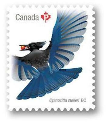 "2018 Canada ~ BIRD Series ~ STELLER'S JAY ~ ""P"" Single MNH ~ FREE SHIPPING"