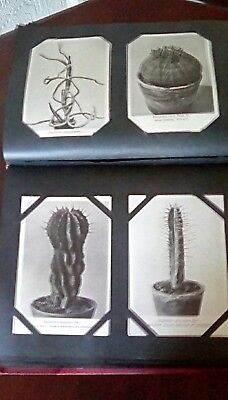 otto stoye postcards in album with over 200 cards of cactus plants vintage 30s 4