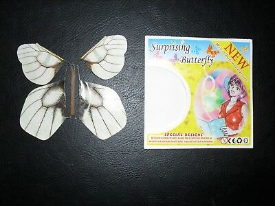 Surprising Butterfly