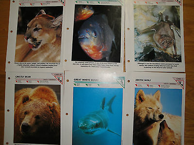 International Masters Publishers Wildlife Fact File collector pages