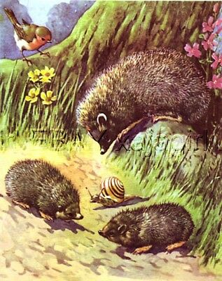Hedgehog & Snail, Cutest 70-year-old CHILDREN's Print