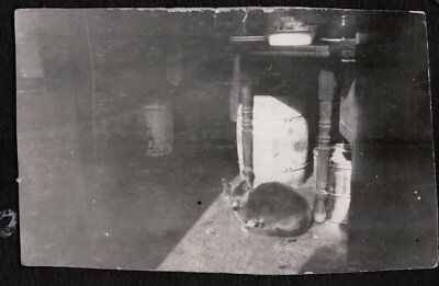Vintage Photograph 1920's Cat Kitten Hanging Out For Hand-Out Pennsylvania Photo