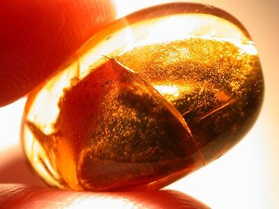 Large Inclusion of Golden Pyrite in Burmite Amber Fossil from the Dinosaur Age!