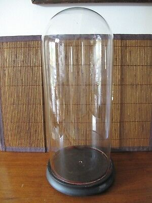 VINTAGE ANTIQUE VICTORIAN CLOCHE GLASS DISPLAY DOME WOODEN BASE Rare Size