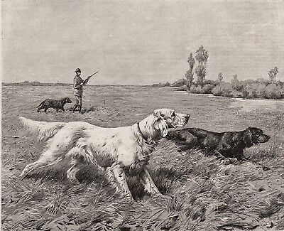 Dog Gordon English Setters Pointing, Curly Coated Retriever 1880s Antique Print