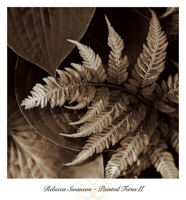 181614 Painted Ferns II by Rebecca Swanson Decor WALL PRINT POSTER UK