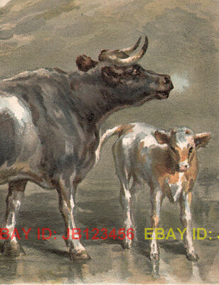 COW Mother & Calf in Field, Antique 1880s Print