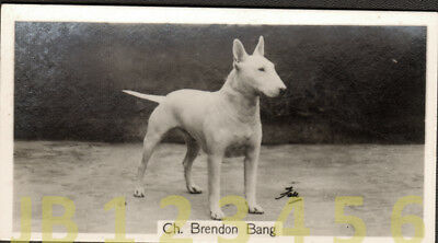 DOG Bull Terrier (Named Champion), Small Photo Trading Card 1938
