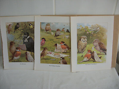 Lot of mixed bookplates from Children's Nursery Rhymes book Ref 2 Birds