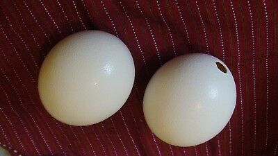 Genuine Ostrich Eggshell Decorative Collectibles and crafts