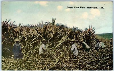 HONOLULU Hawaii HI SUGAR CAN FIELD harvesting postcard