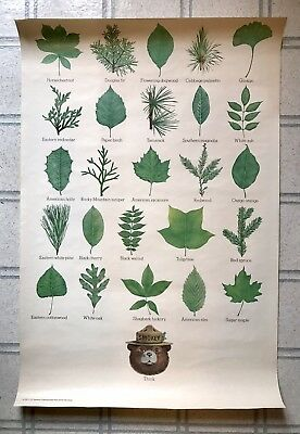 Smokey Bear THINK Fire Prevention Green Plant Poster