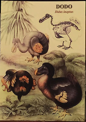 9 Dodo Cards Extinction Icon Victorian Museum Ornithology Fossil Blanks
