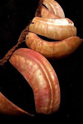 Old Bailer Shell Necklace - Chimbu People New Guinea