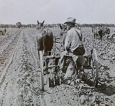 Cultivating Egyptian Cotton Near Phoenix, Arizona, Magic Lantern Glass Slide