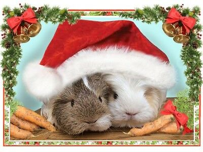 "GUINEA PIG RABBIT HAMSTER GERBIL CHINCHILLA RESCUE XMAS CARDS 5""x7"" VARIOUS DES"