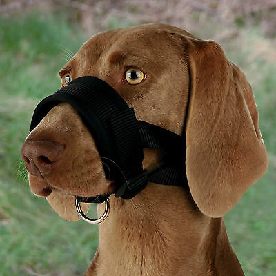 XL Dog Muzzle Loop with D-Ring for Head Lead Fully Adjustable Padded Comfortable