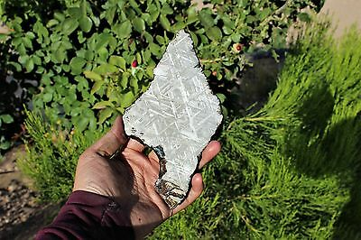 Muonionalusta meteorite etched full slice 310.3 grams!