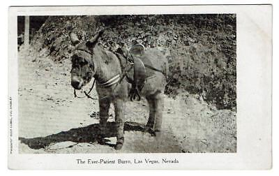 Las Vegas, NV   The Ever-Patient Burro  -- Donkey  Nice Unposted Undivided Back