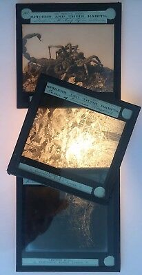 Magic Lantern Slides Spiders And Their Habits Sanders & Co. The Hancock Series