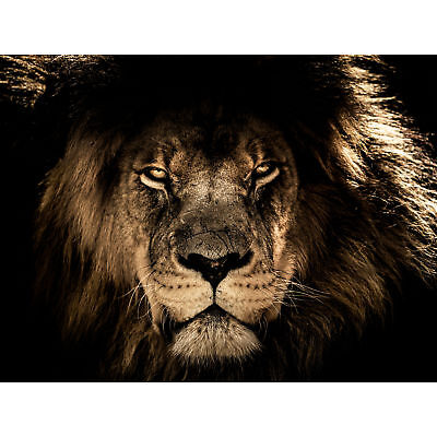 Male African Lion Face Cat Large Canvas Wall Art Print