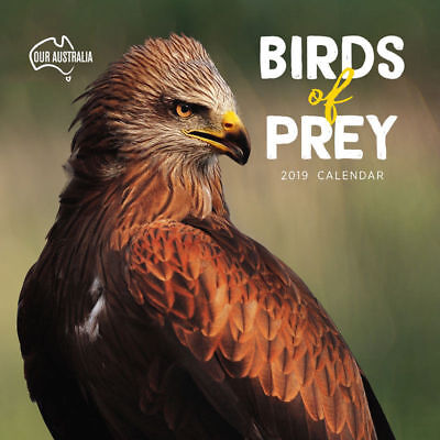 Our Australia Birds of Prey 2019 Wall Calendar Paper Pocket 30x30cm Eagles Hawks