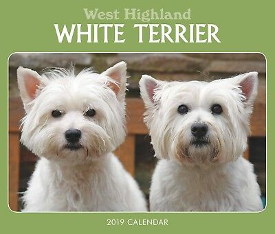 WEST HIGHLAND WHITE TERRIER Dog Desk Calendar 2019 | WESTIE Calendar Page a Day