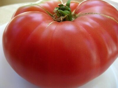 Mortgage Lifter Tomato Seeds- Heirloom- 75+ 2019 Seeds  $1.69 Max Shipping/order