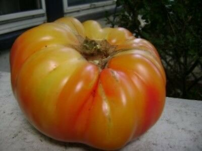 Pink Brandywine Heirloom Tomato Seeds 75 2019 seeds        $1.69 Max Shipping