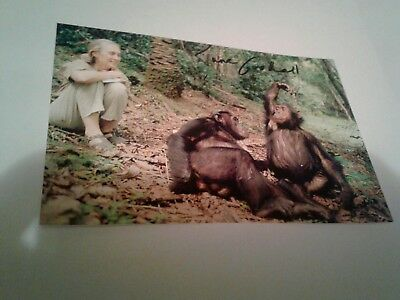 Jane Goodall autographed 4x6 photo with COA