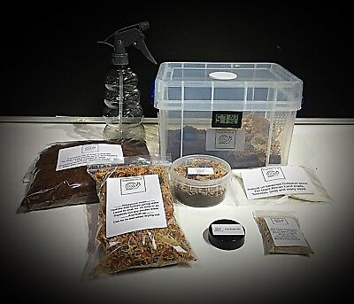 Giant African Land snails, Basic starter kit with substrate, moss, food,