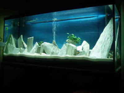 Natural White Slate Stone For An Aquarium Aquascaping Iwagumi Style, Malawi