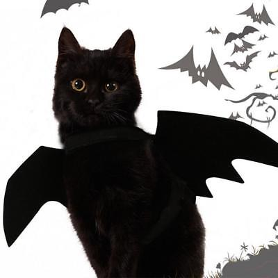 Halloween Pet Hat Bat Wings Spider For Cat Superhero Dress Up Outfit Costume AU