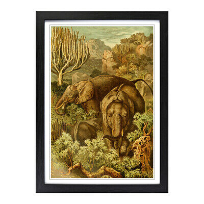 Framed Picture Print A2 Vintage Brehms Tierlben African Elephant Animal Wall Art