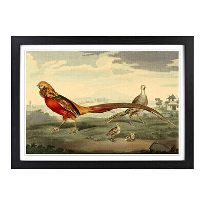 Framed Picture Print A2 Vintage Charles R Ryley Painted Pheasant Animal Wall Art