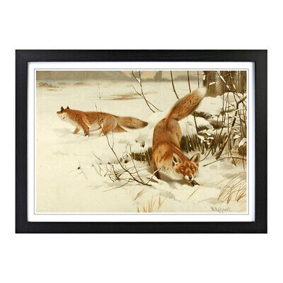 Framed Picture Print A2 Vintage W Kuhnert Common Fox Animal Retro Wall Art