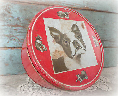 large antique biscuit candy tin box 1930s Boston Terrier dog vintage bull dogs