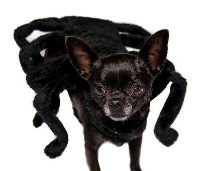 "Dog Spider Costume MEDIUM Chest:16-18"" Black Fancy Dress Pet Outfit Dress-up"