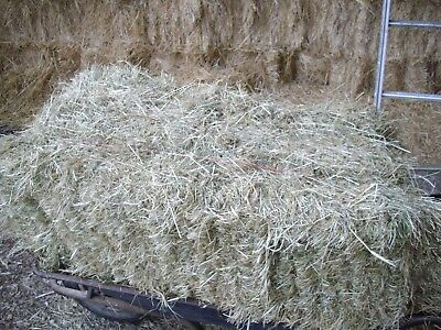 Hay Bales Small Conventional Fodder Equine 2018