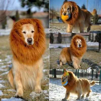 3820dffc338 PET COSTUME LION Mane Wig Hair for Large Dog Halloween Apparel Fancy Dress  up