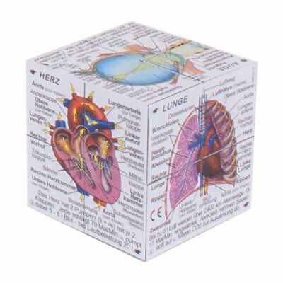 ZooBooKoo Scientific Human Body Cube - Systems and Statistics (German Version)