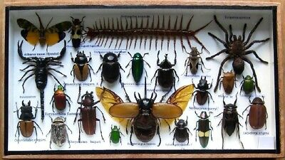 23 Real Mounted Insect Boxed Rare Insects Display Taxidermy Entomology Zoology