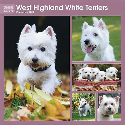 365 Days of Westies 2019 Wall Calendar | Great Xmas Gift for Dog Lovers