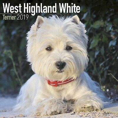 West Highland White Terrier 2019 Wall Calendar | Square Westie Dog Calendar