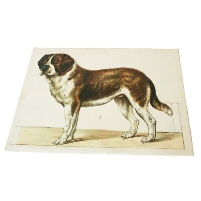 Antique Anatomical Dog St. Bernard Medical Veterinary Anatomical 5 part Overlay