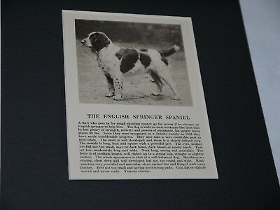 Vintage The English Springer Spaniel Matted Print Black & White with Verbiage
