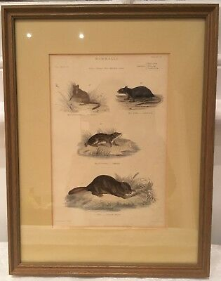 """Framed 19th C. hand-coloured engraving, Plate 15, """"Museum of Natural History"""""""