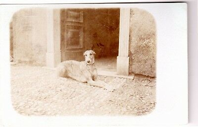 Vintage Italian Post Card of Greyhound at Rest