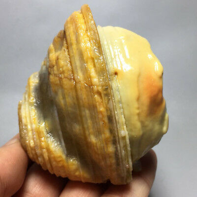 Natural Collection Miraculous Jade Agate Tumbled Stone Specimens 246G