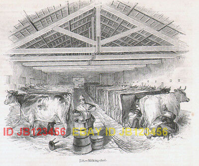 COW Dairy Milking Shed & Milkmaids, Antique 1840s Print